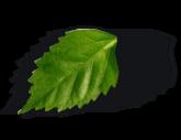Tomme Fruitée Le Rustique & Magret de canard fumé au bois de hêtre