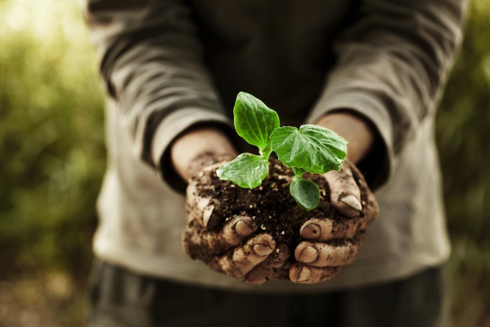 Mains dans de la terre avec plante
